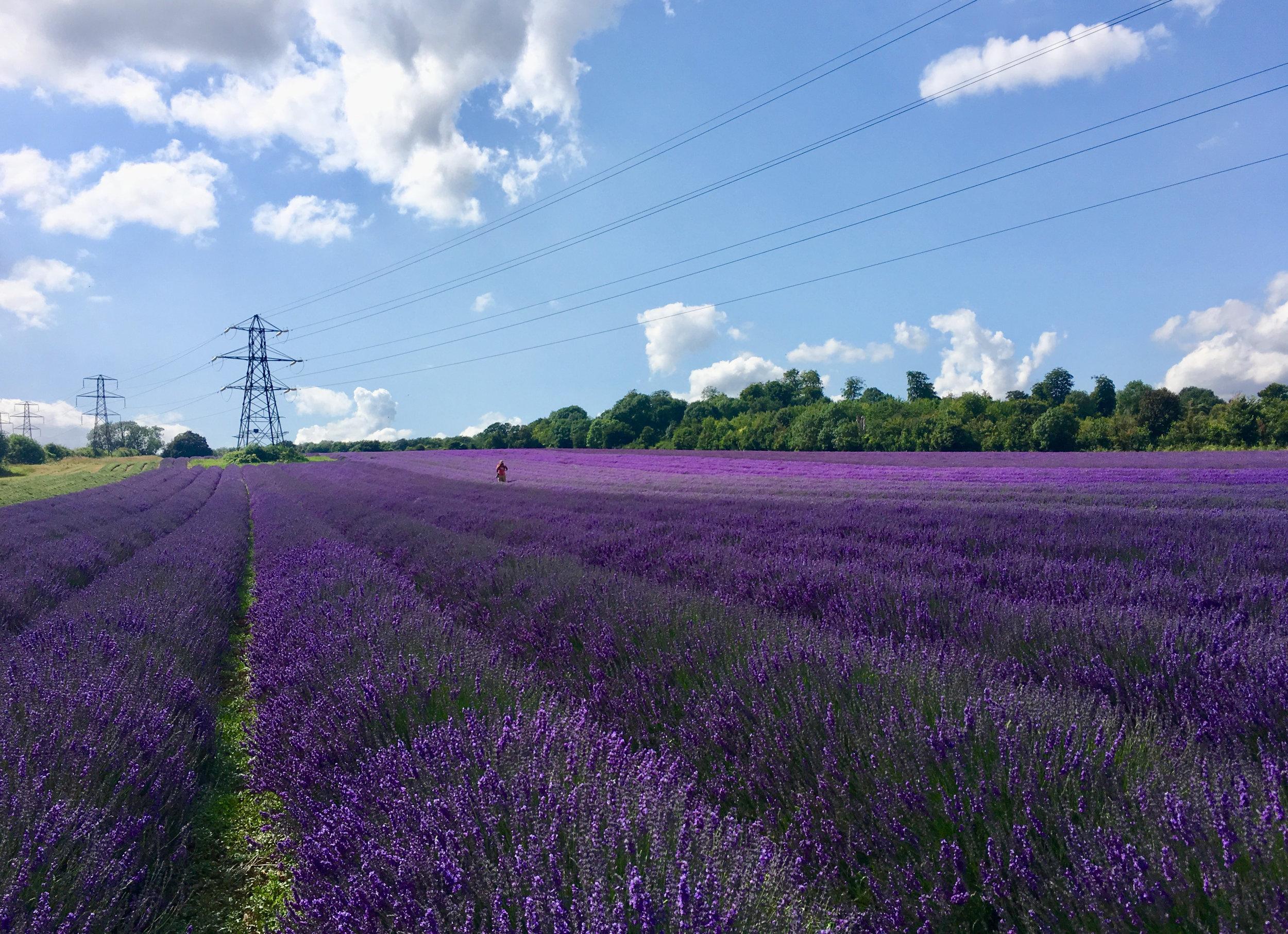 Lavender Castle Farm eileen hsieh follow that bug London Hop Shop