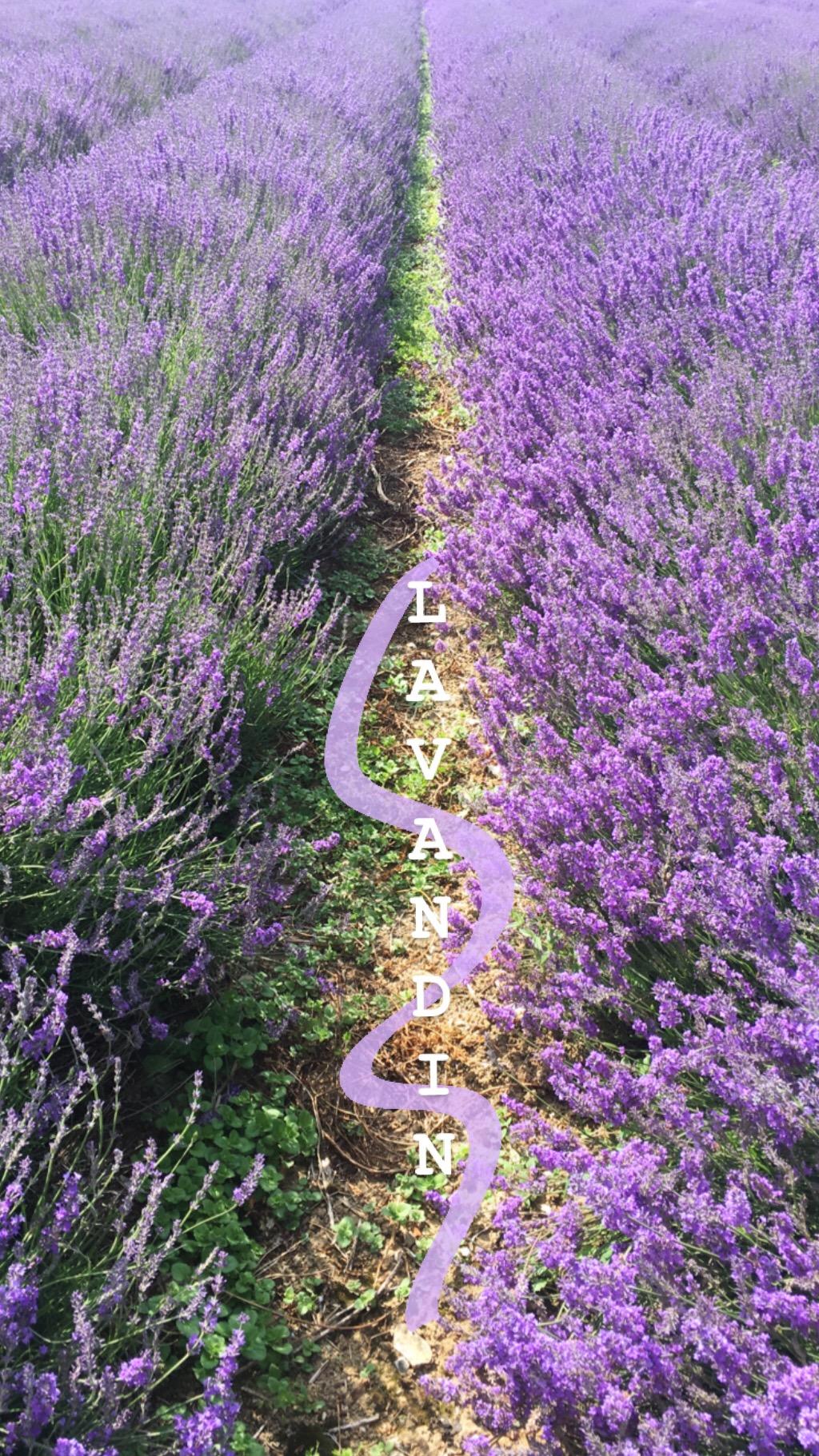 Lavender Hop Shop Castle Farm eileen hsieh follow that bug 8.JPG