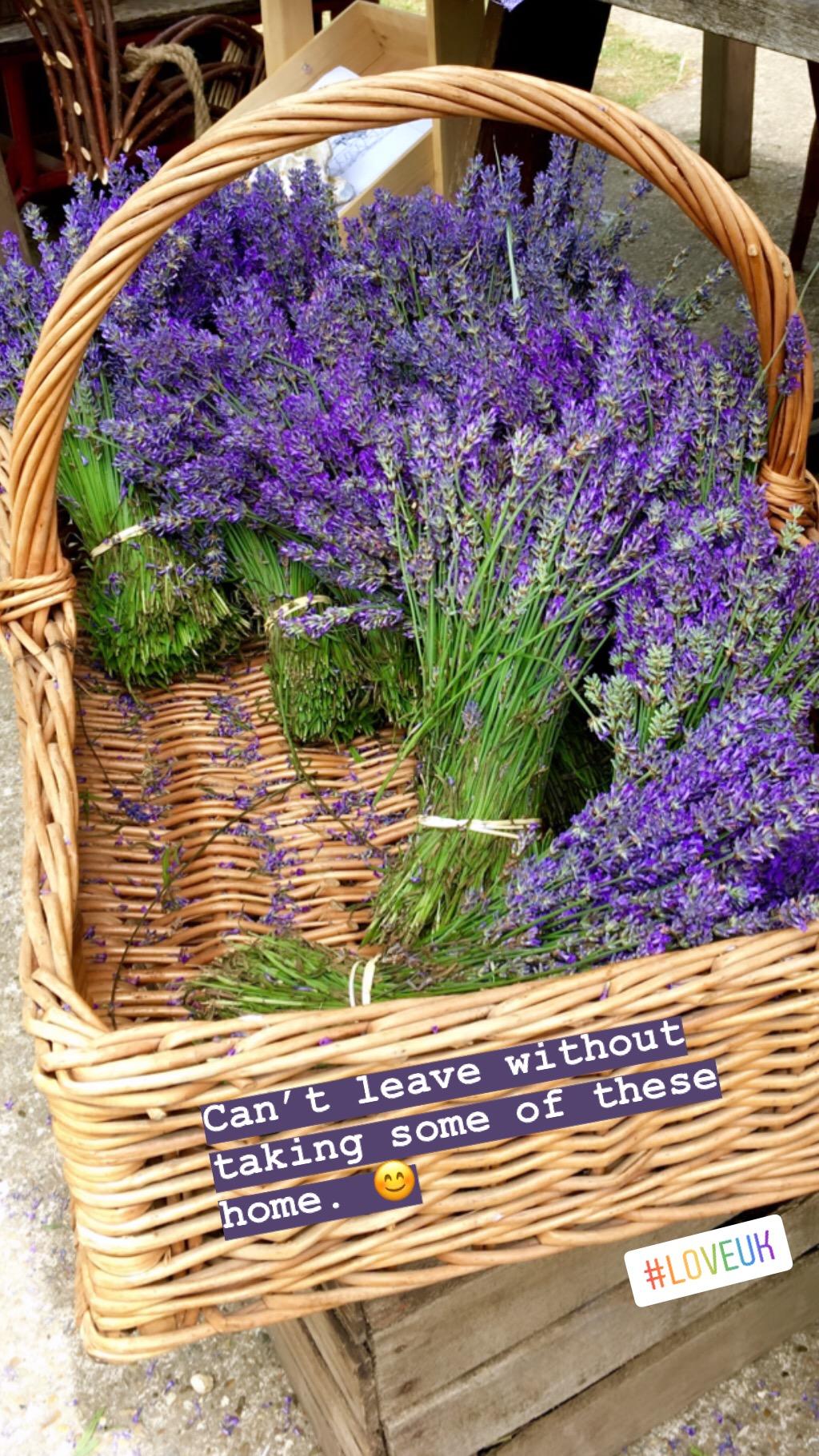 Lavender Hop Shop Castle Farm eileen hsieh follow that bug 11.JPG