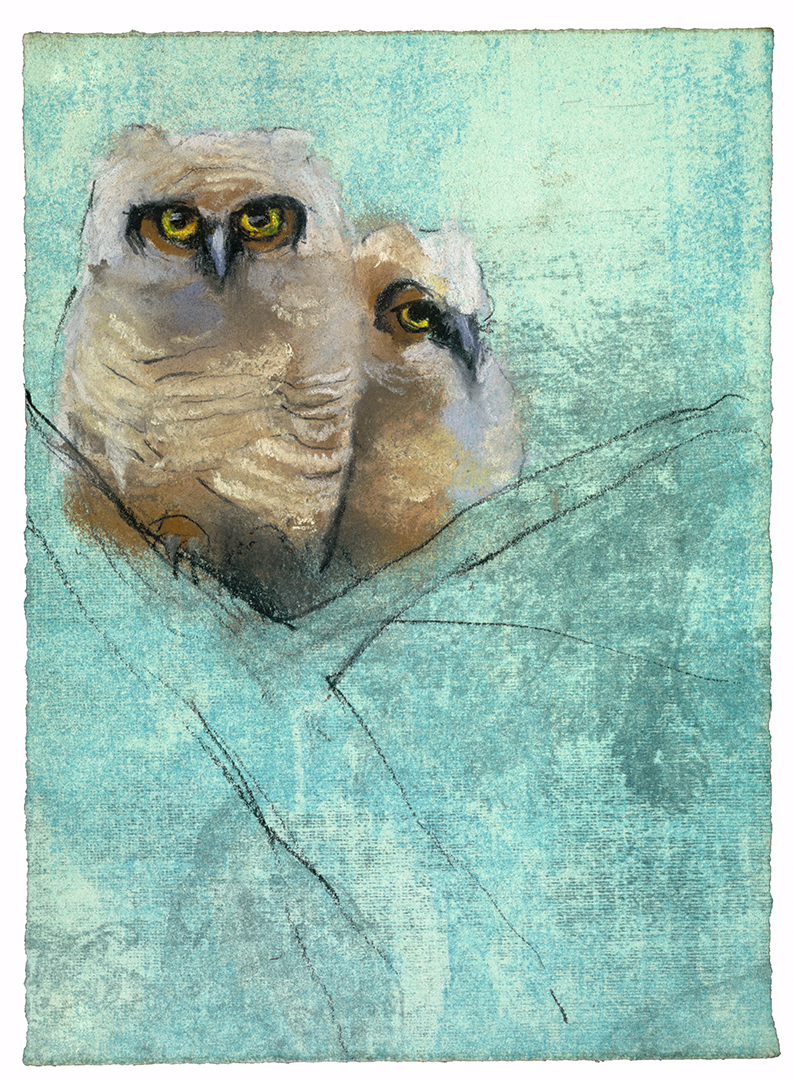 Great Horned Owlets #28