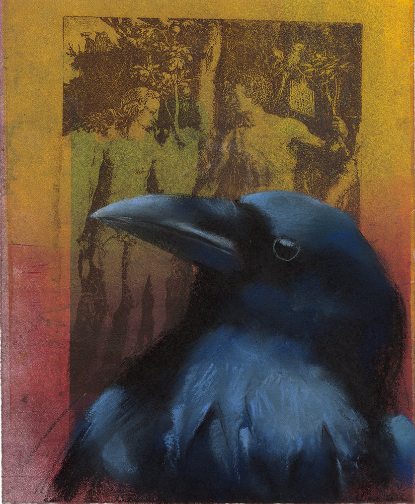 Raven on Dürer