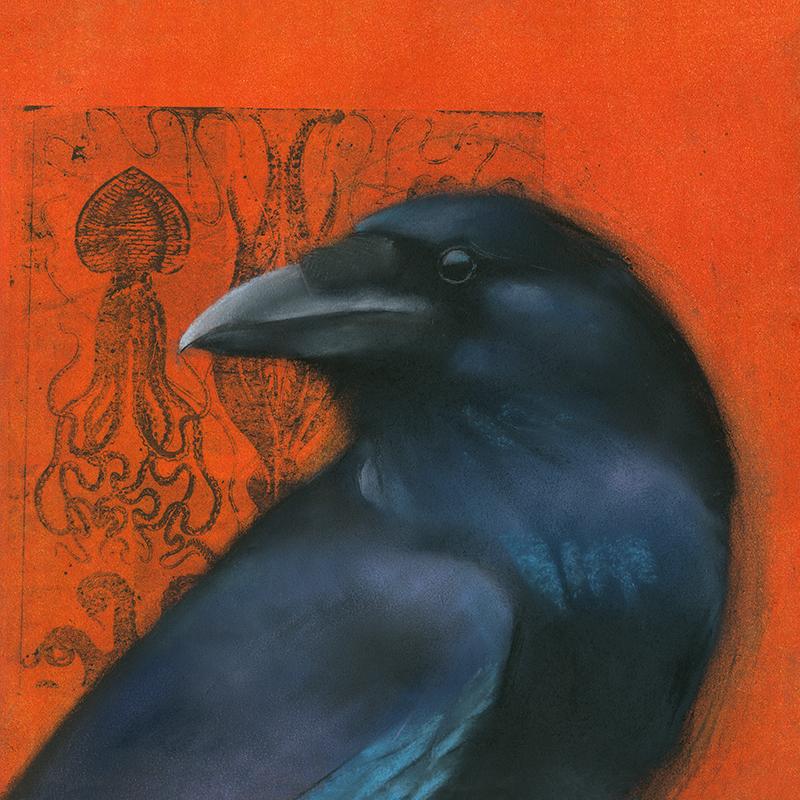 Raven on Squid