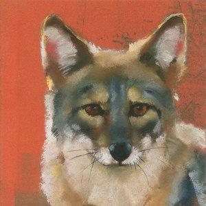 Mini-Coyote.jpg