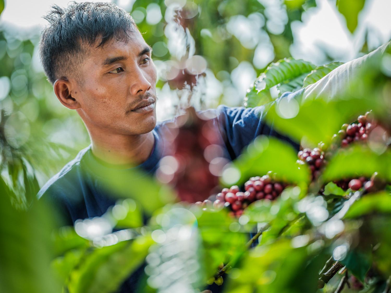 LDC-Coffee-Indonesia-Lampung-web-7832.jpg