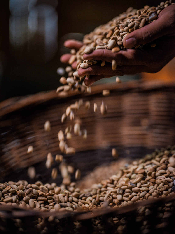 LDC-Coffee-Indonesia-Silangit-web-7515.jpg