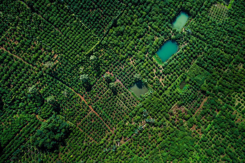 LDC-Coffee-Vietnam-Lam-Dong-web-0015.jpg