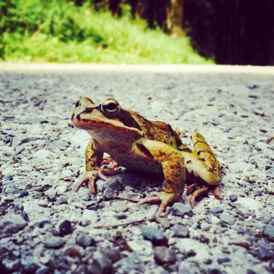 Totally frog aware