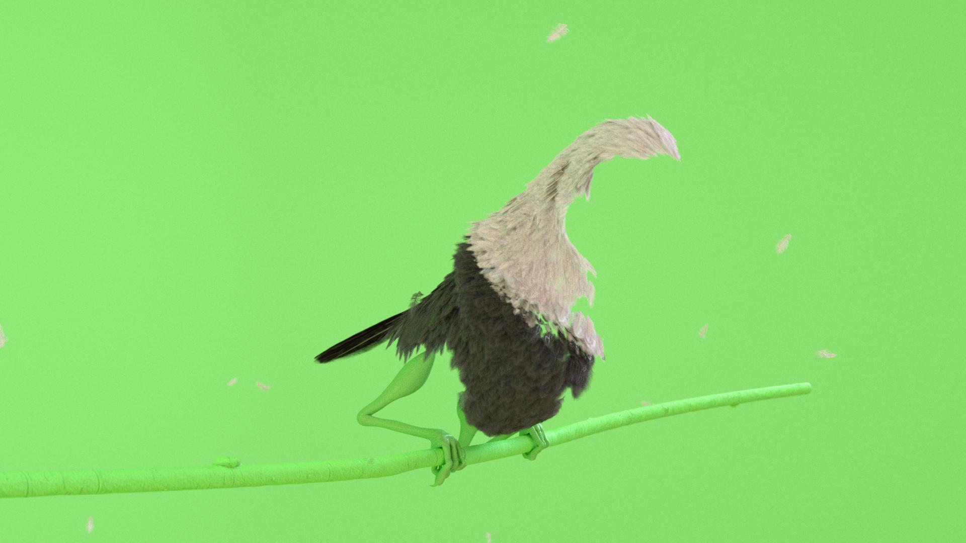 Birds_Feathers.jpg