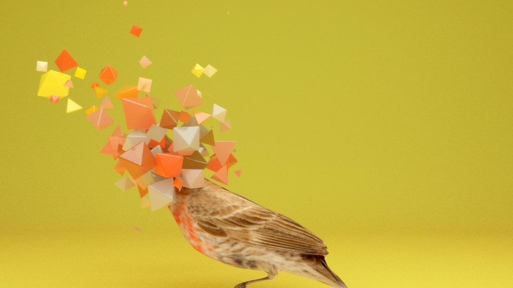 Bird RedHead0010.jpg