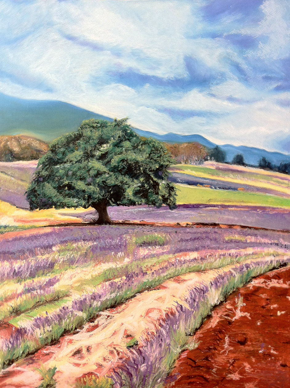 Lavender field - oil pastel on illustration board (15x20 inches)