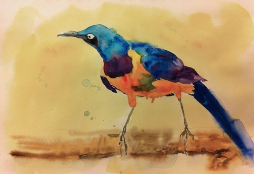 Golden-breasted starling - Watercolor on watercolor paper (9x12 inch sketchbook)