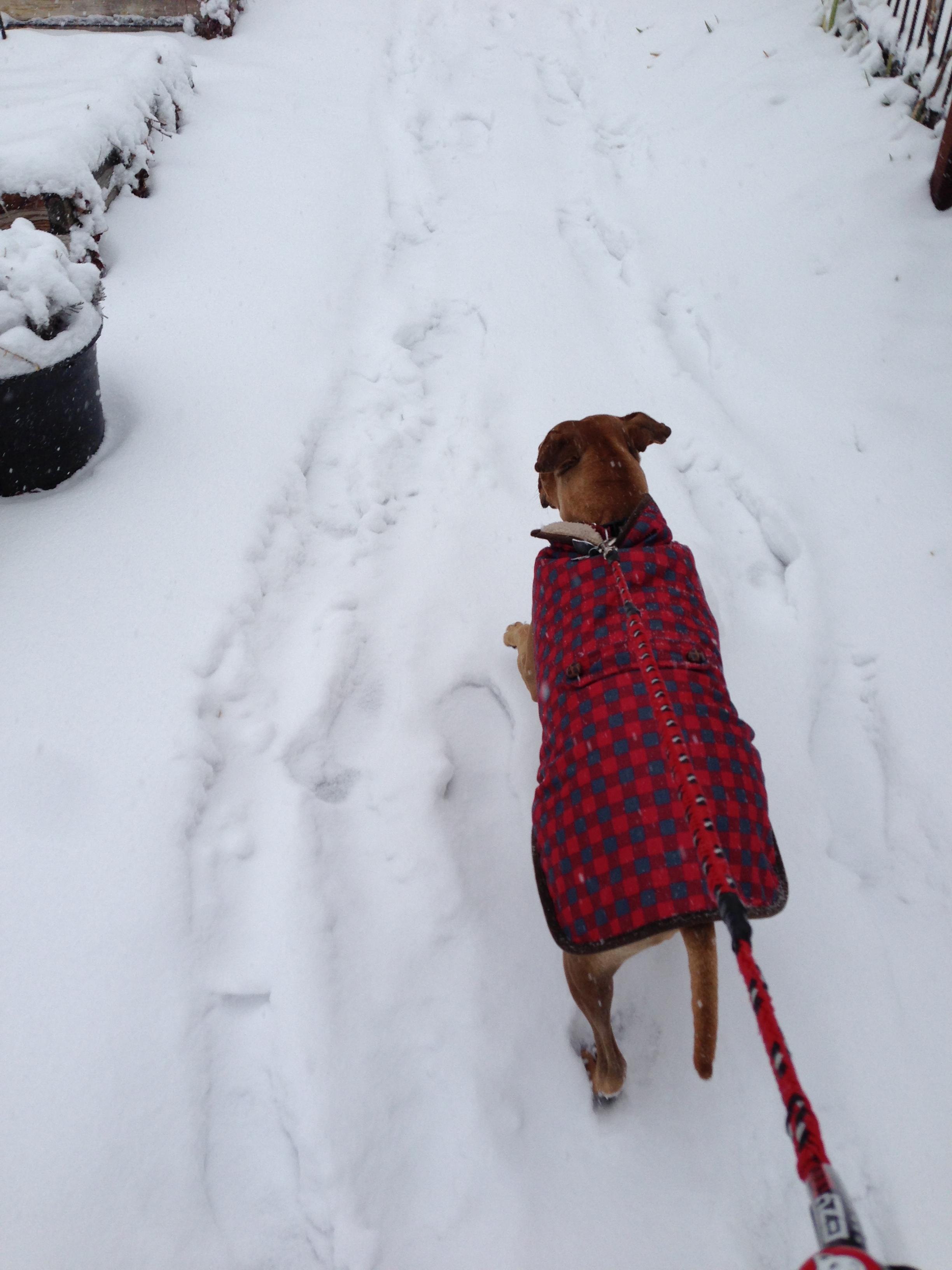Betty, the snowdog.
