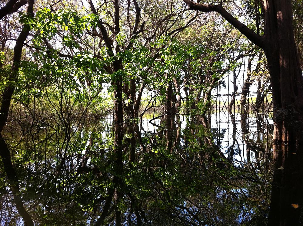 Kampong Phluk mangroves, Tonle Sap Lake, Siem Reap