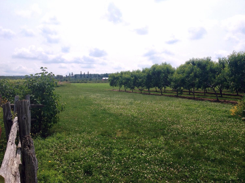 goodearthorchard