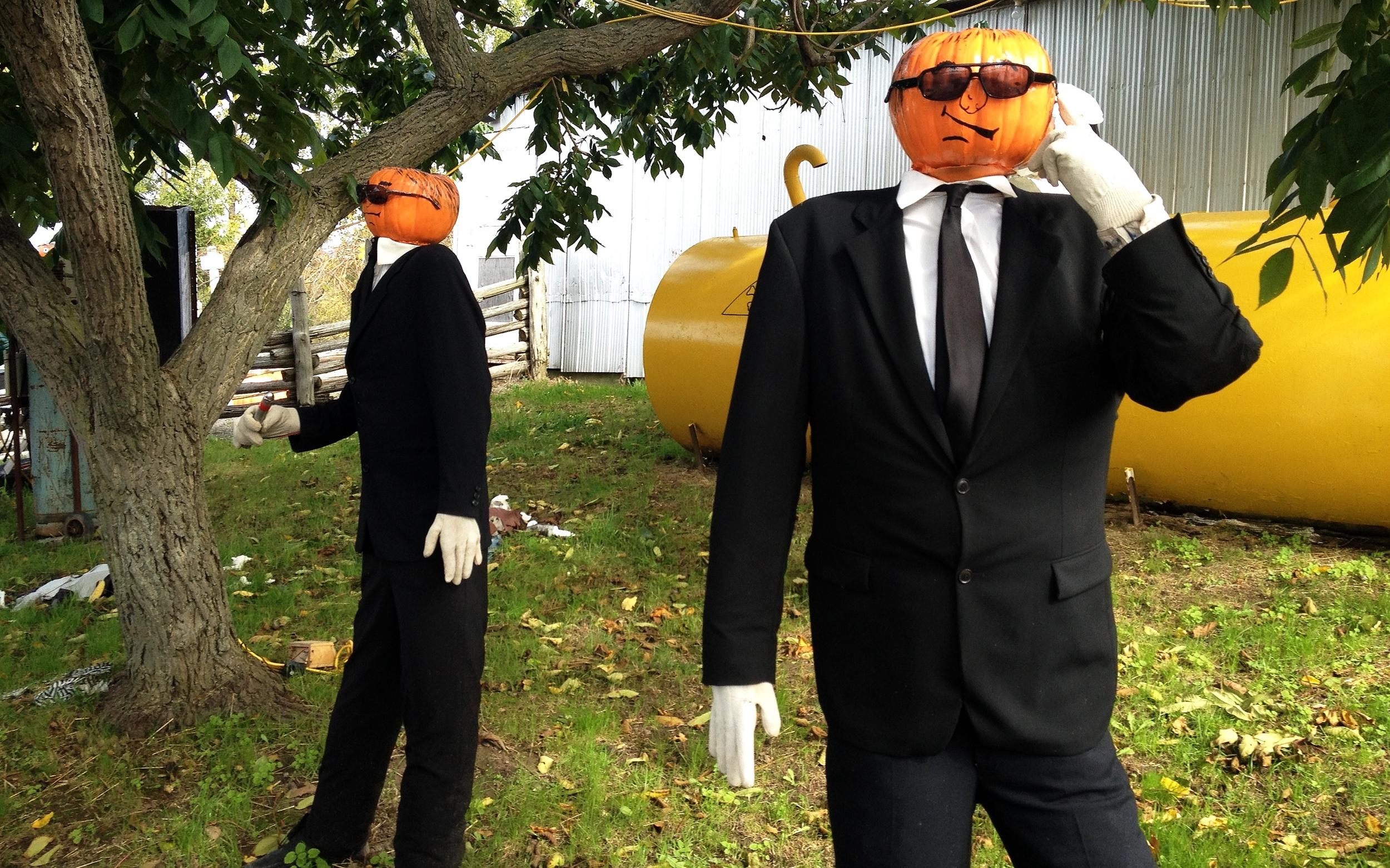 Pumpkins in Black.