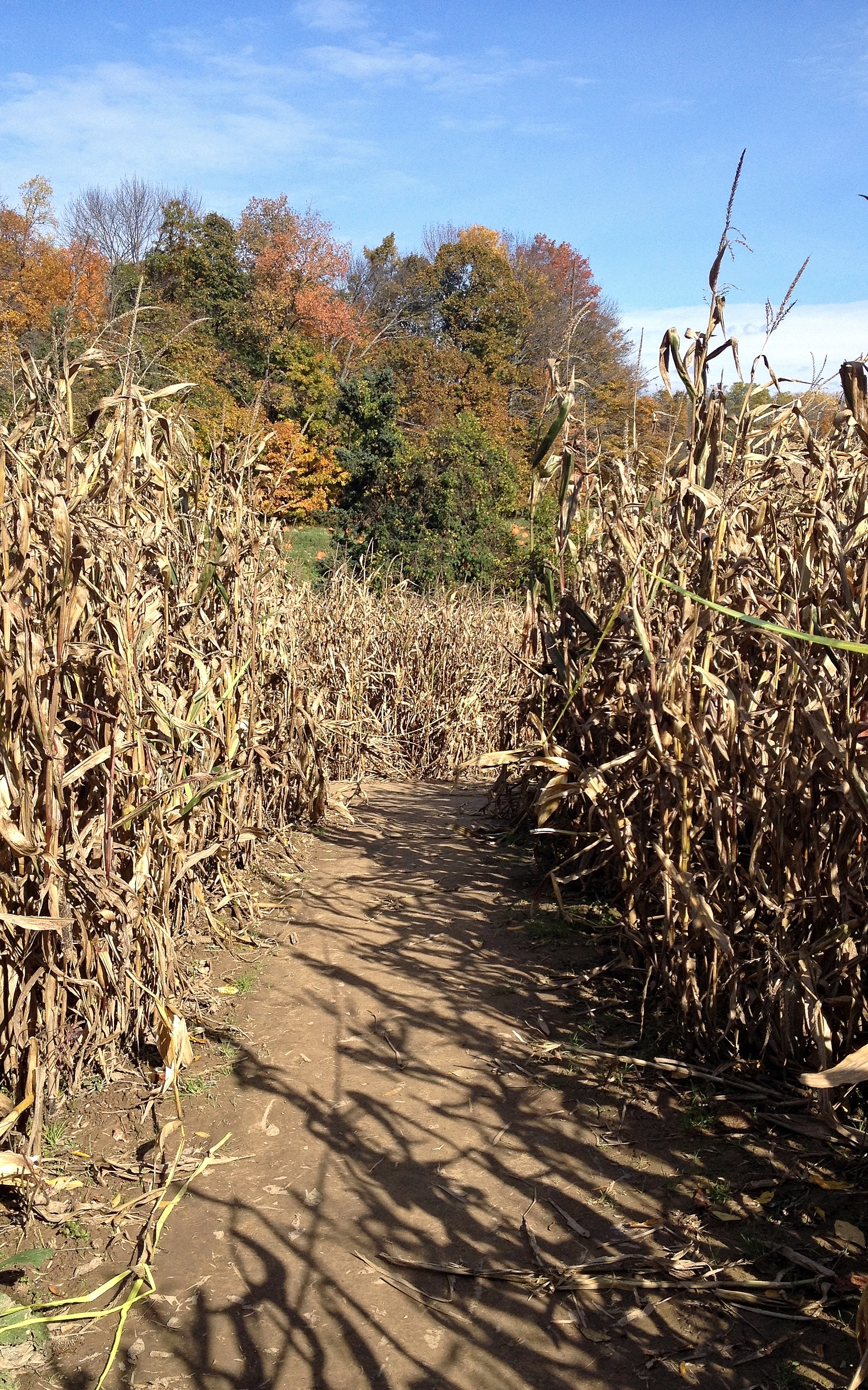 """We did a corn maze! It was a first for the both of us. I tried the old """"keep your left hand on the wall"""" trick, but either screwed up or debunked it. We still got out pretty quickly, though."""