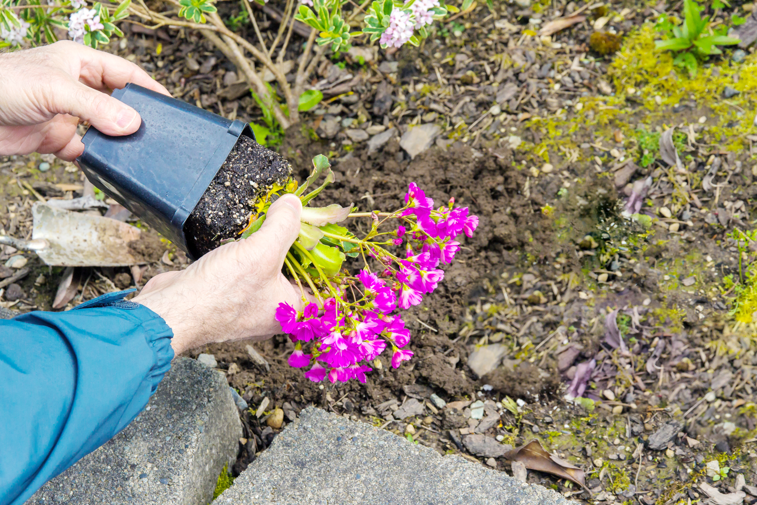 Make your own compost at home with a backyard composting bin. Compost is a beneficial soil amendment that can help your plants grow healthier.