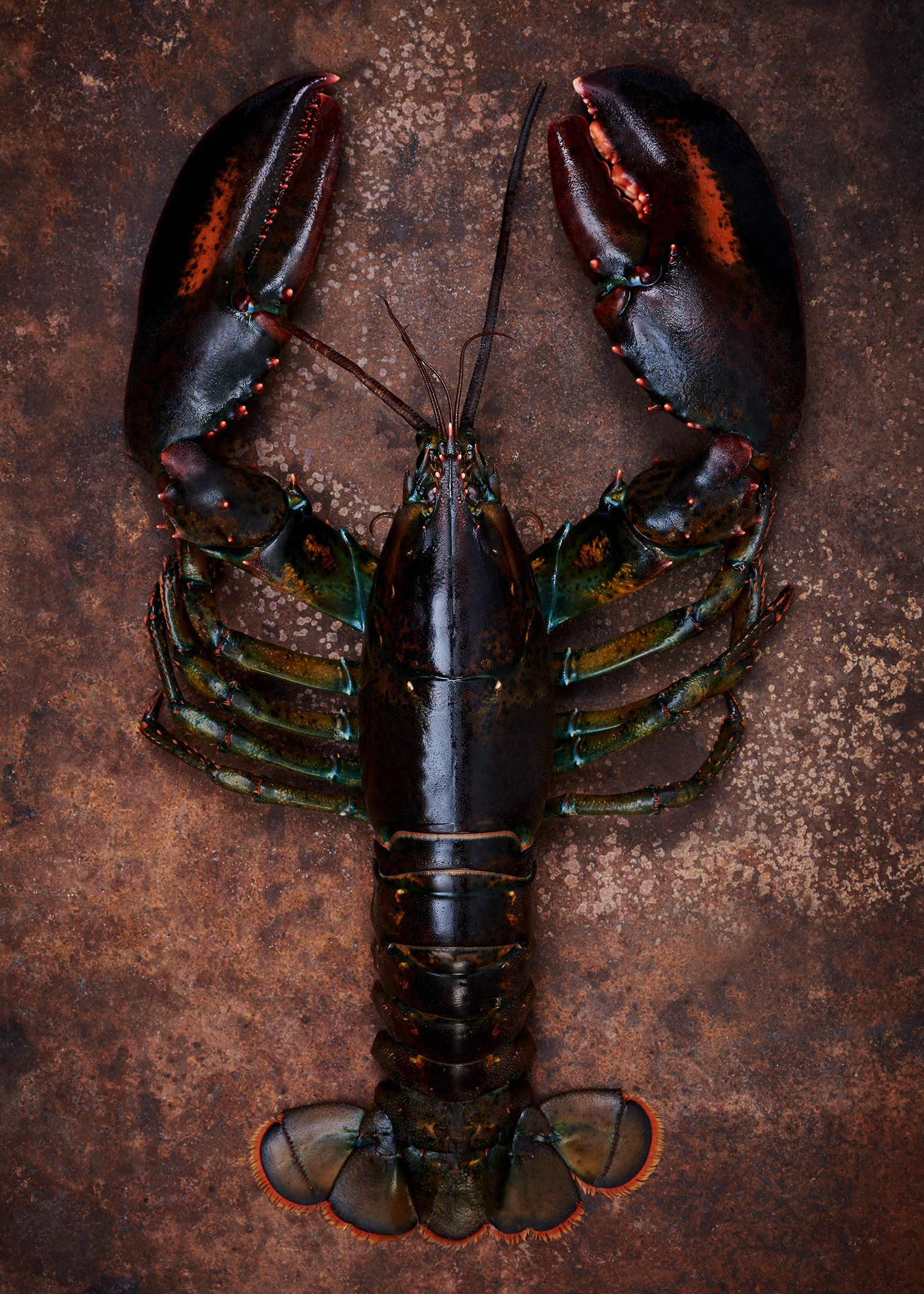 fresh lobster by London food photographer Holly Pickering