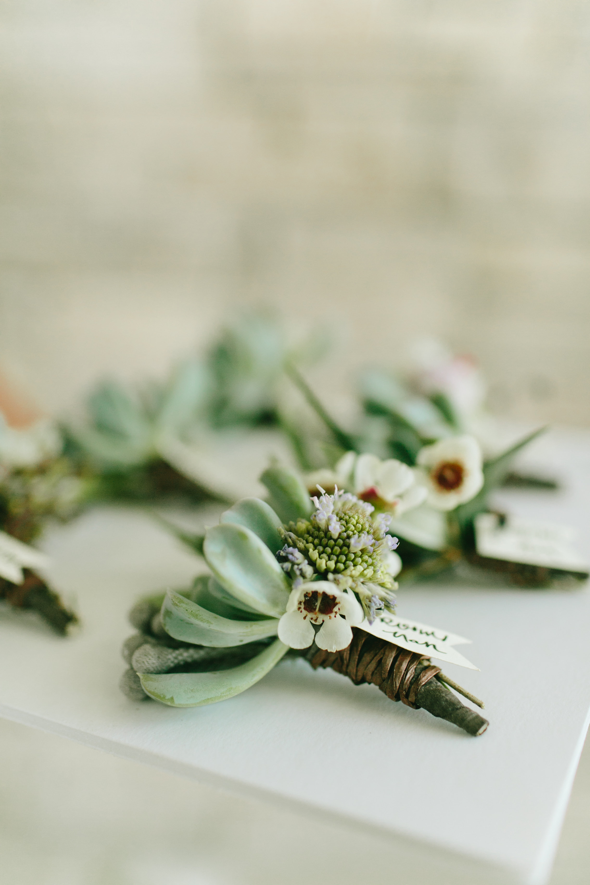 Flowers by Lace and Lilies, succulent, wax flower and scabiosa boutonniere