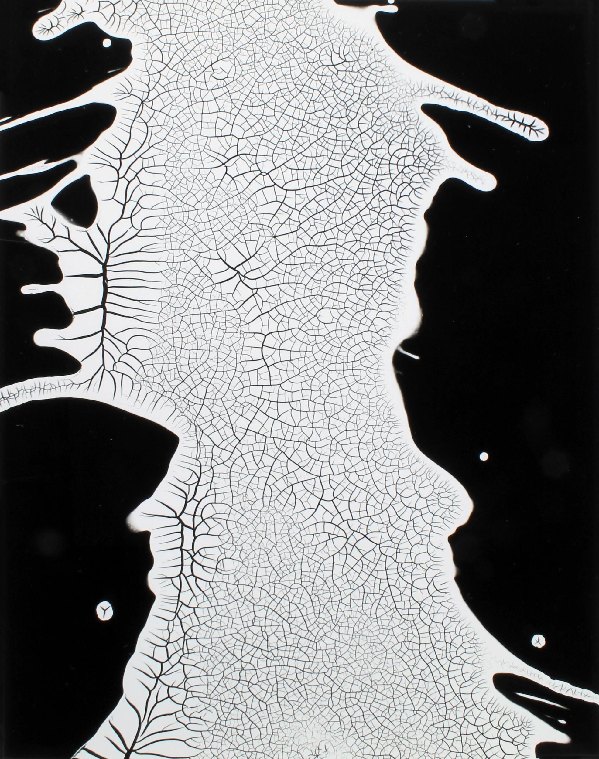 Hollis Frampton | Untitled