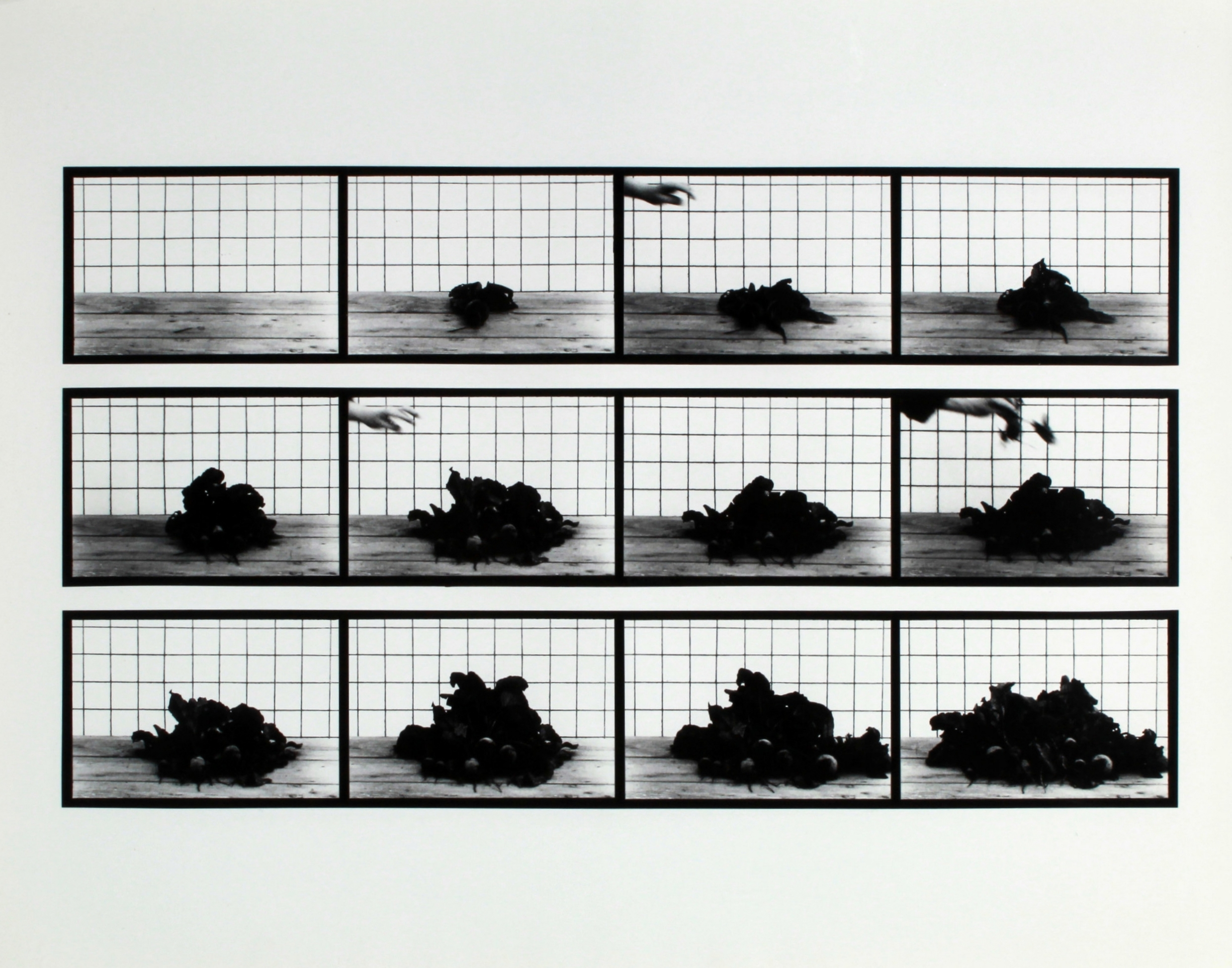 Hollis Frampton and Marion Faller | 668. Beets Assembling (1975)