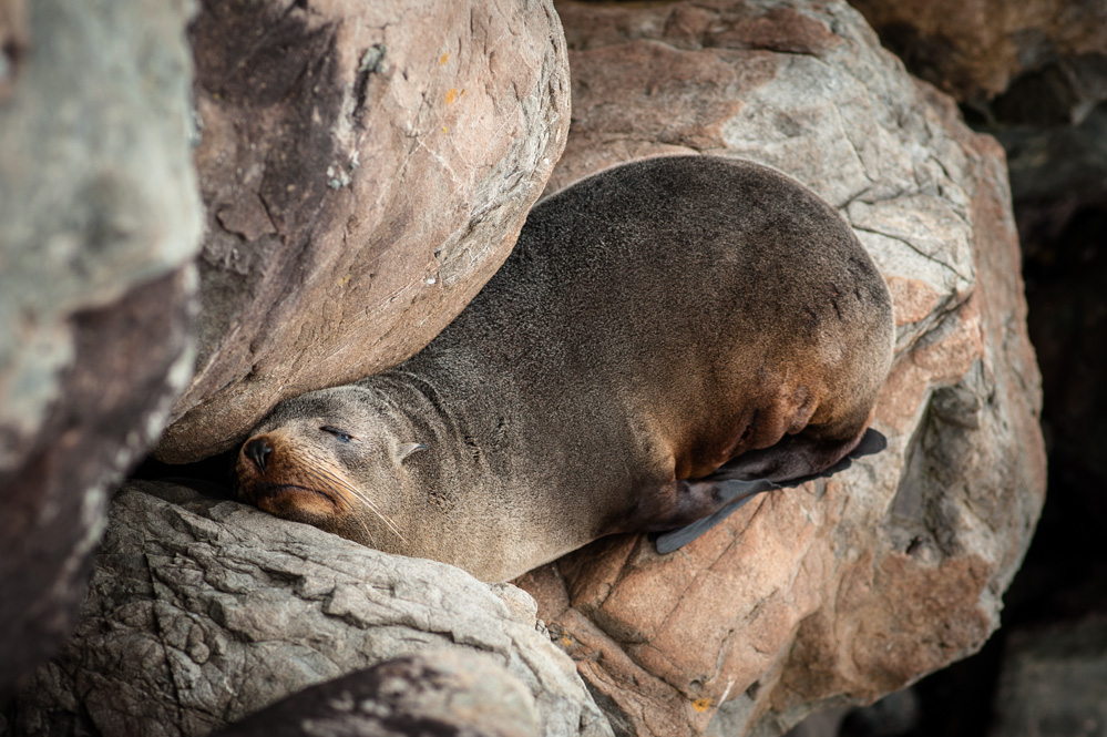 This seal sleeping on the rocks of the sea wall wasn't too bothered about it all