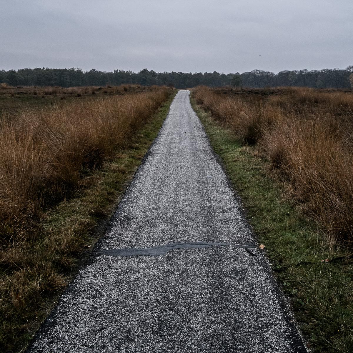 Bike paths on the exposed moor