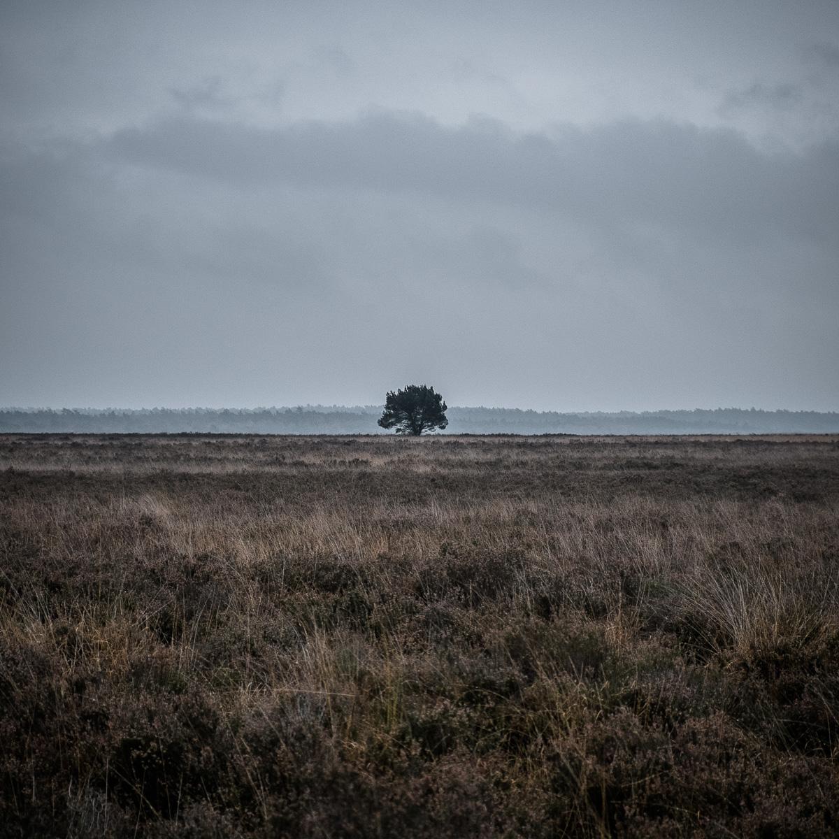 Lonely tree cliche pic