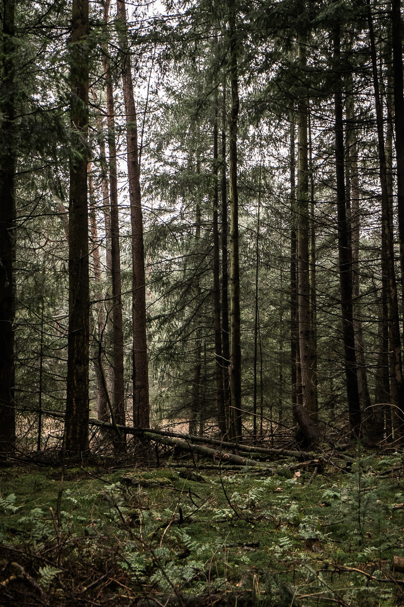 Hoge Veluwe forests