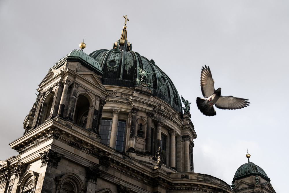 Berliner Dom and Pigeon