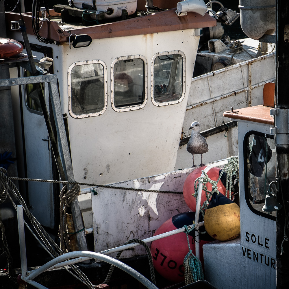 Fishing Boat and Seagull