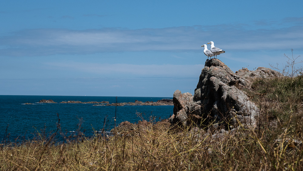 Seagulls keeping watch for invasion