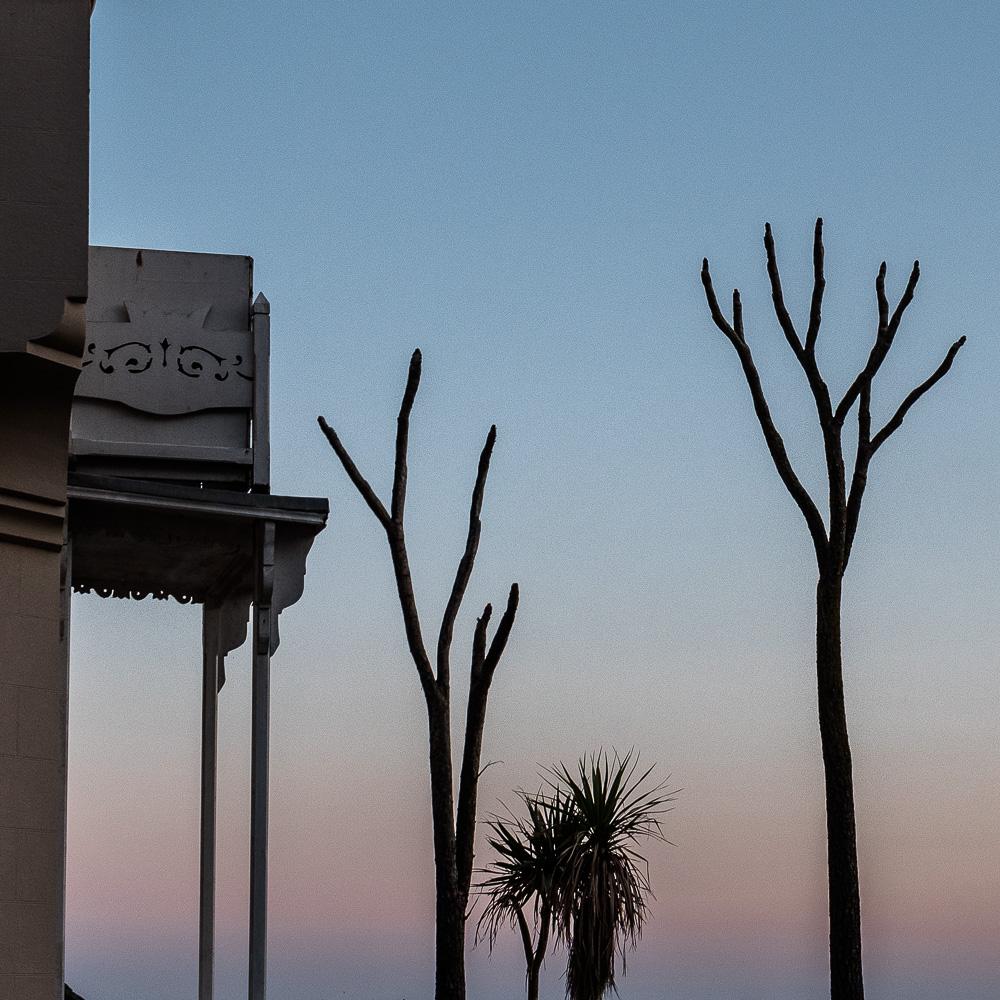 Beachfront trees
