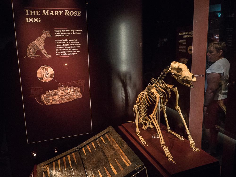 The Mary Rose Dog
