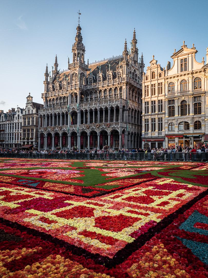 Flower Carpet and the Maison du Roi