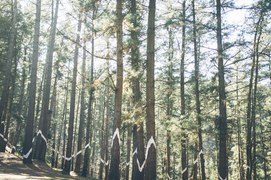 El Bosque de Oma es una obra ochentera del pintor Agustín Ibarrola, en la que los árboles han sido decorados para componer figuras (bastante abstractas) si se miran desde un punto en concreto.