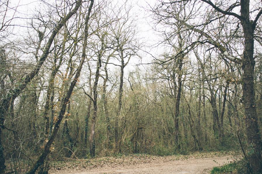 El bosque de Armentia.