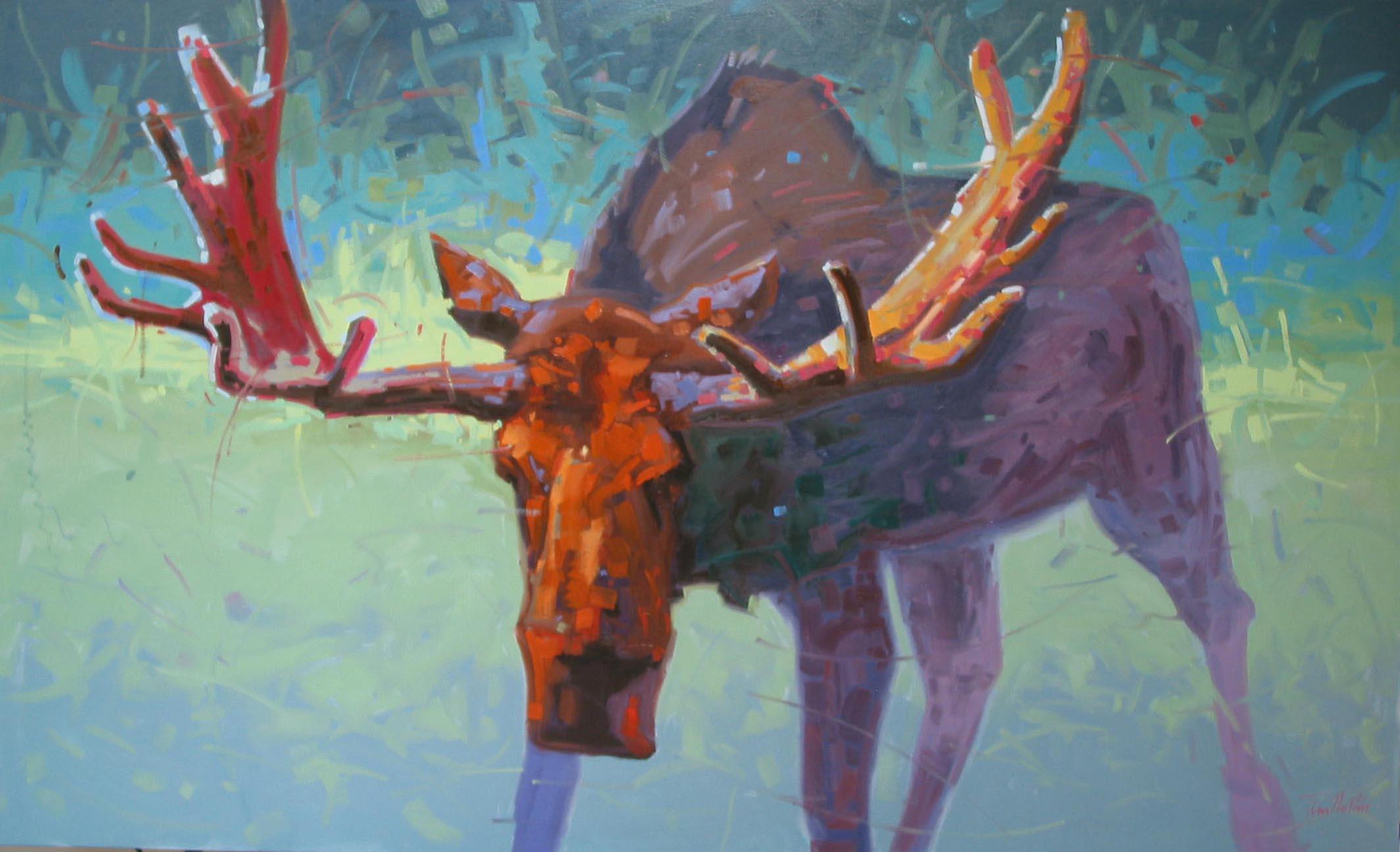 Moose Encounter