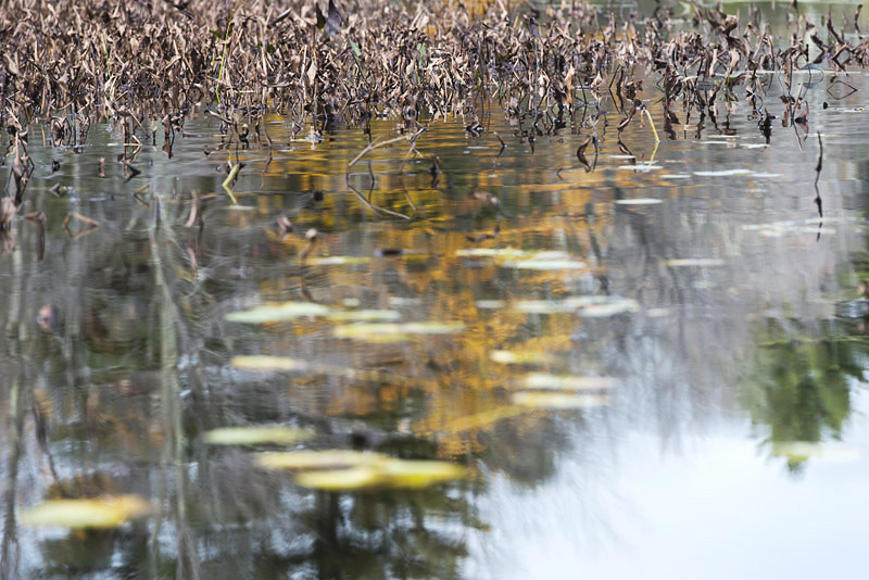 Pond 10, 2012