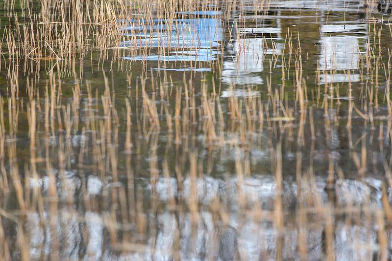 Pond 15, 2012