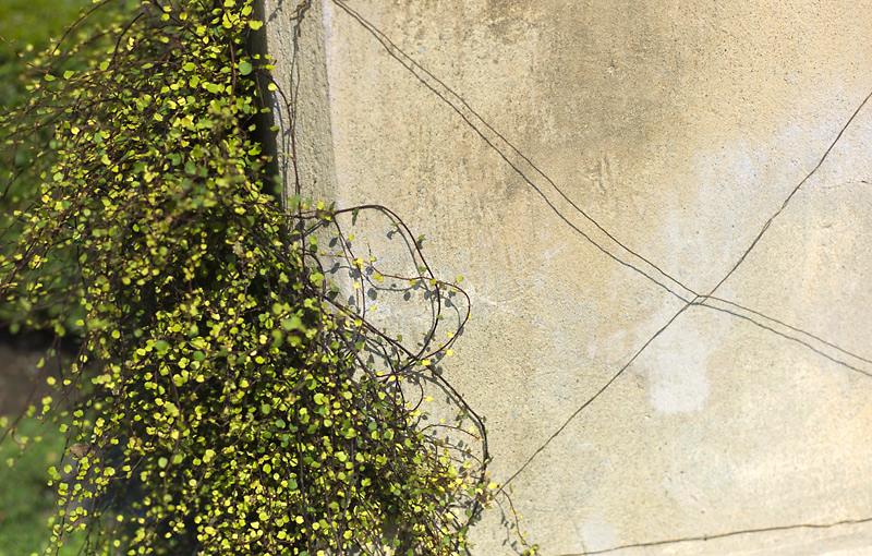 Muri di Italia 7, 2013