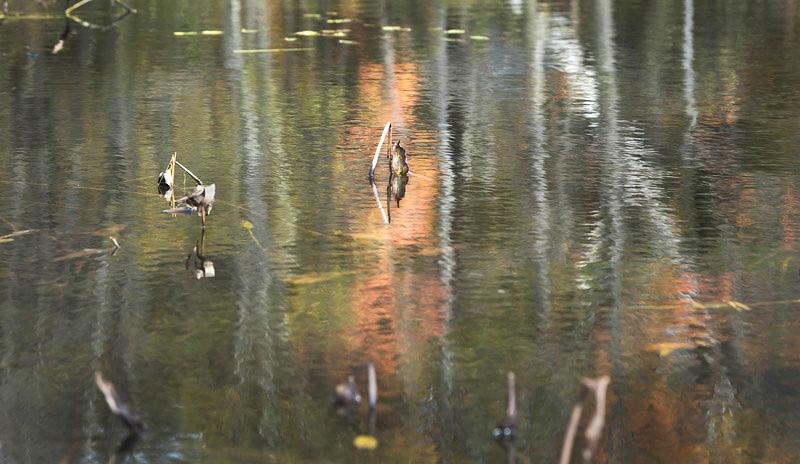 Pond 14, 2012