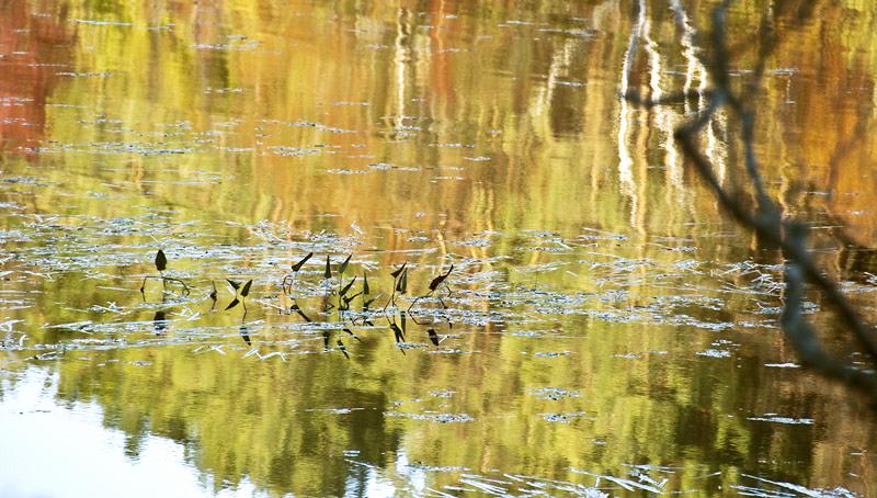Pond 17, 2012