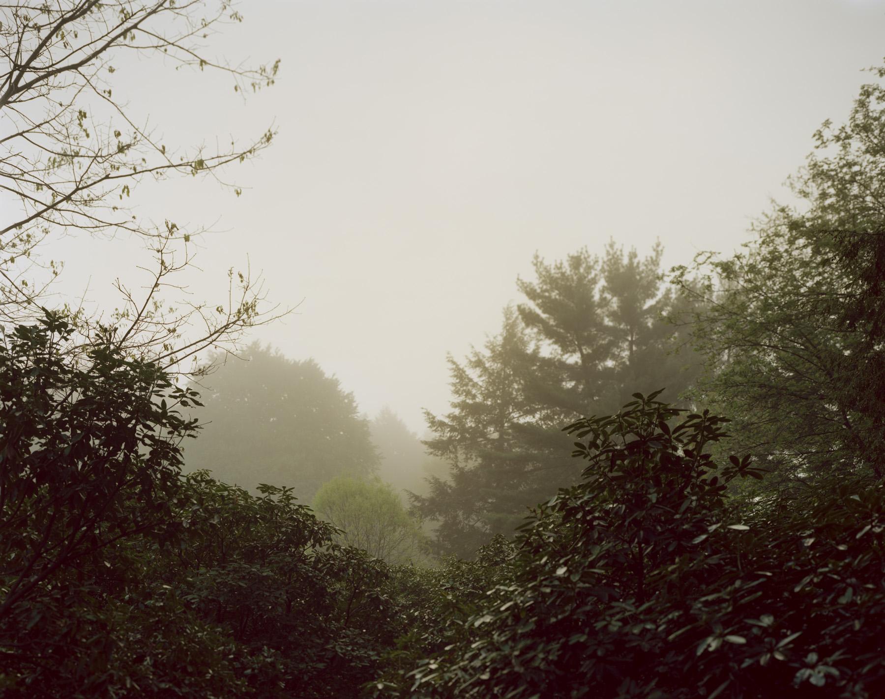 Arnold Arboretum, Boston MA, 2013