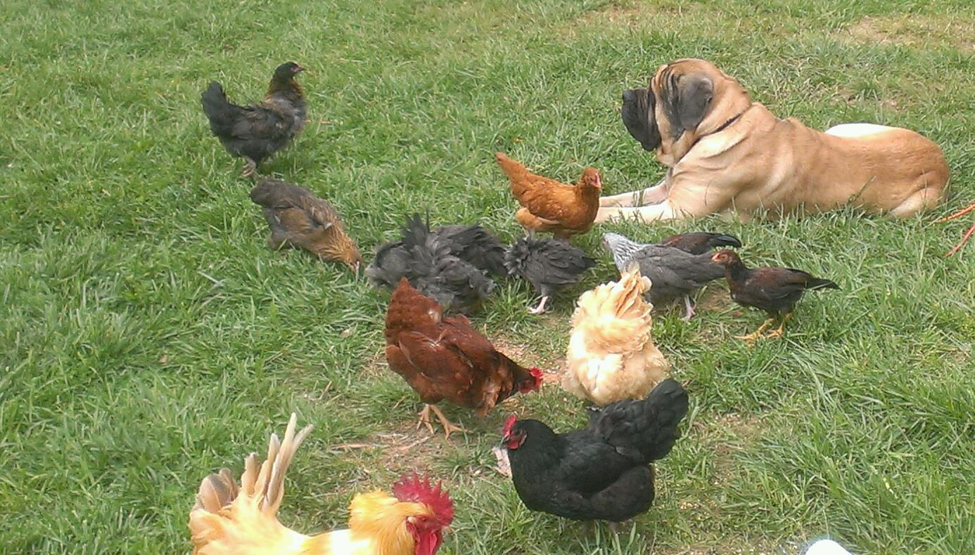 Chicks dig the dog