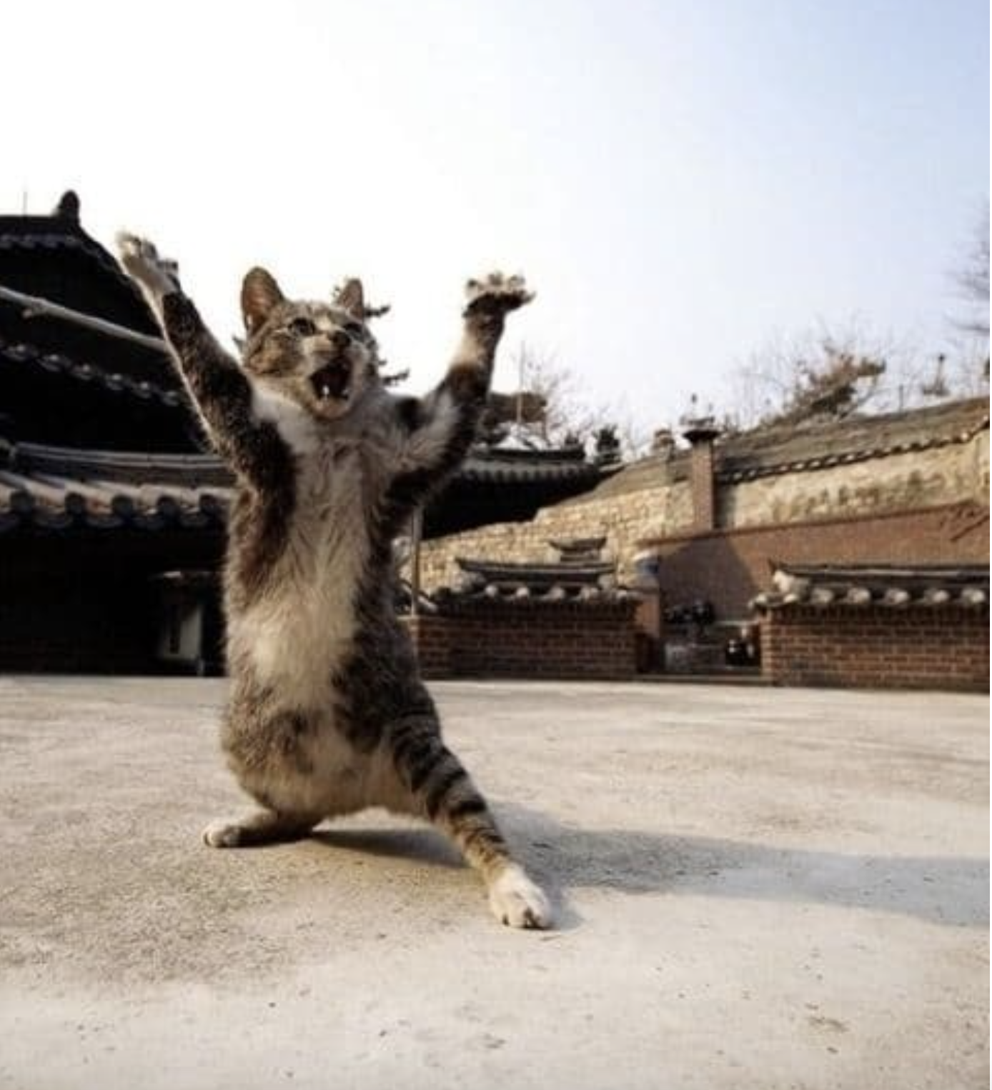 Is this Karate Cat? - (original photo)