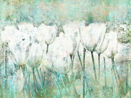 White Tulips II.jpg