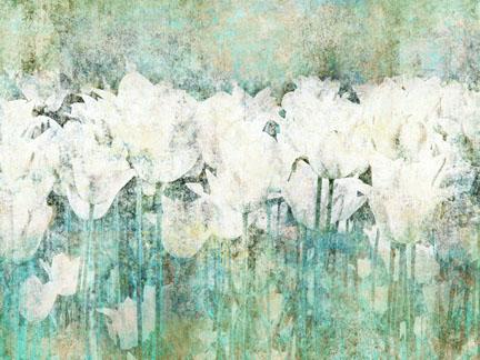 White Tulips I.jpg