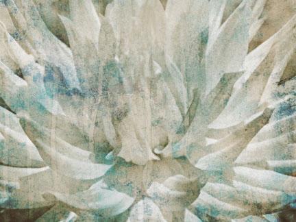 Abstract Chrysanthemum II.jpg