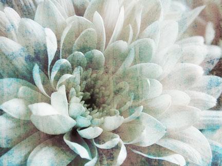 Abstract Chrysanthemum I.jpg